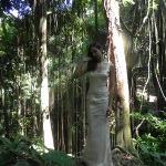 Rainforet1